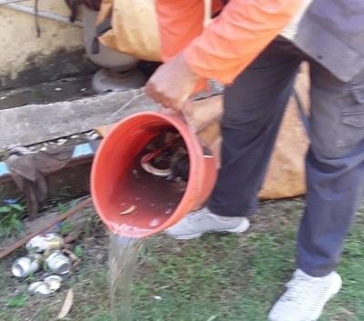Dengue: barrios con muy alto riesgo