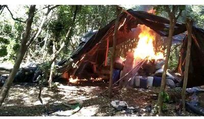 Destruyen campamentos y plantaciones de marihuana en Amambay