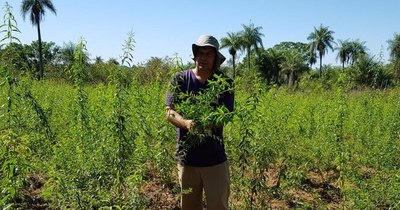 La Nación / Buscan fortalecer rubro de plantas medicinales para beneficiar a pequeños productores