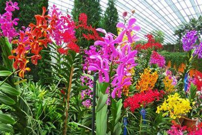 Arrancó la expo feria de orquídeas