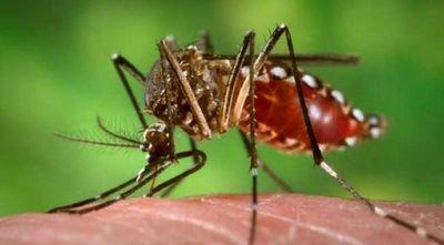 COVID-19 más Dengue: sin prevención situación sanitaria puede empeorar