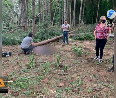 Hombre fallece aplastado por un árbol en Itapúa
