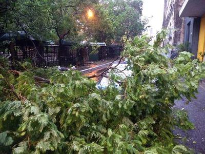 Temporal deja árboles caídos, usuarios sin luz y un tránsito caótico