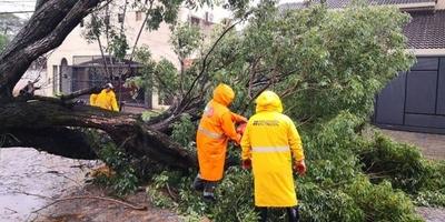 HOY / Reportan casi 50 árboles caídos en Asunción tras el temporal