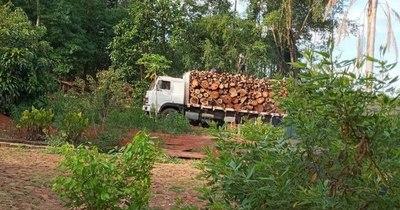 La Nación / Vecinos denuncian tala de árboles en predio de Infantería en CDE