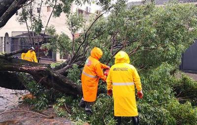Reportan al menos 42 árboles caídos en Asunción