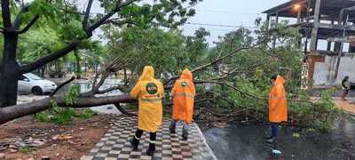 Al menos 42 árboles caídos en Asunción en el transcurso de la mañana