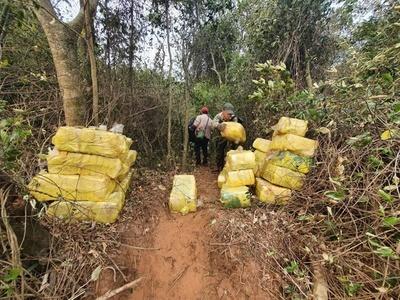 Hallan 1.200 kilos de marihuana a orillas del Paraná