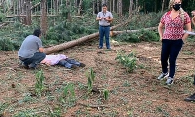 Joven de 21 años muere aplastado por árbol de pino que estaba talando