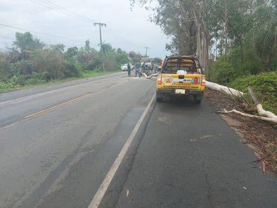 Caída de árbol obstruye via Luque