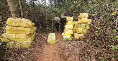 La Nación / Incautan más de mil kilos de marihuana a orillas del Paraná