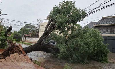 Meteorología registró vientos de hasta 118 km/h durante tormenta