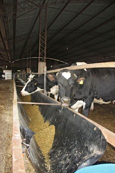 Experiencias con productos Agrinplex en ganadería