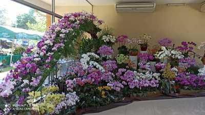 Expo Orquideas en San Lorenzo