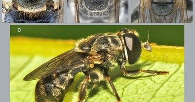 La Nación / Logran nuevos registros geográficos de insectos