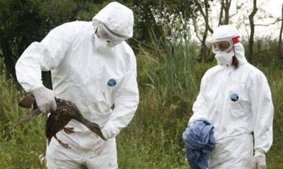 HOY / Hallan cepa de gripe aviar en una granja de pavos del norte de Inglaterra