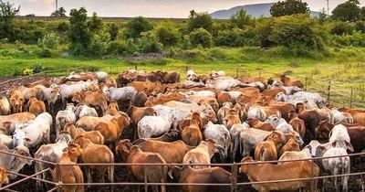 """La Nación / Quieren reforzar cadena productiva con """"Plataforma Nacional de Carne Sustentable"""""""