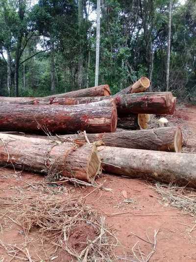 Organismos de control ignoran denuncias sobre deforestación en estancia Mosquito