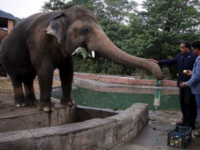 El elefante más solitario del mundo llega a su nueva casa en Camboya