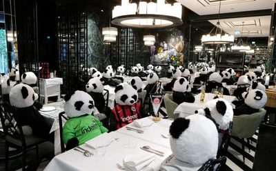 Restaurante alemán utiliza osos de peluche para protestar contra la pandemia