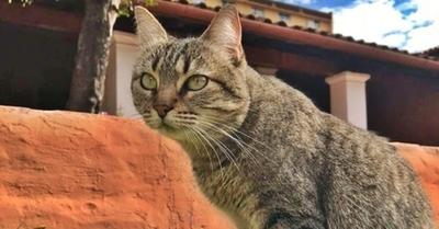 La gata Clarita ya tiene cédula