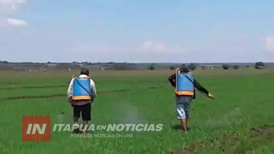 PEQUEÑOS ARROCEROS DE CNEL. BOGADO SOLICITAN ASISTENCIA ESTATAL