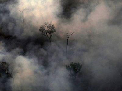 La deforestación en la Amazonía brasileña crece un 9,5% en el último año