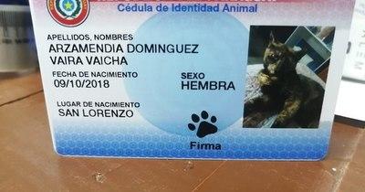 """La Nación / C. I. animal: """"Una forma de demostrar amor y que la mascota pertenece a la familia"""""""