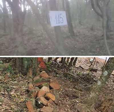 Dieron vía libre a Mbururú y su caterva de invasores para arrasar con reserva