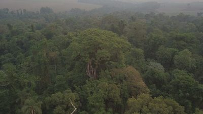 En una magnífica noche de premiación, se conocieron a los árboles más grandes del Paraguay