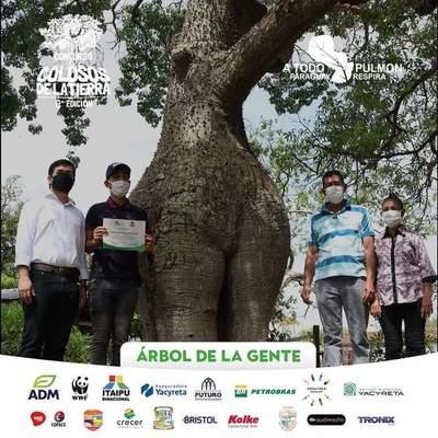 """""""Samu'u Doncella"""" es el árbol de la gente – Prensa 5"""