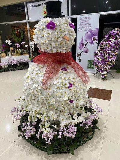 Mañana culmina feria de orquídeas en San Lorenzo