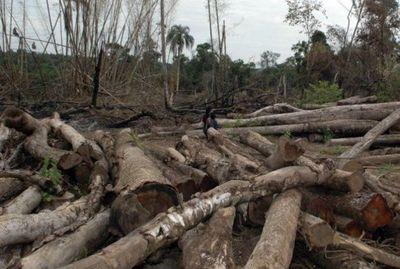 """Piden extender Ley de Deforestación Cero: """"Vamos a seguir degradando nuestro medio ambiente y la salud humana"""""""