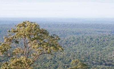 HOY / Organizaciones solicitan la ampliación de la Ley de Deforestación Cero