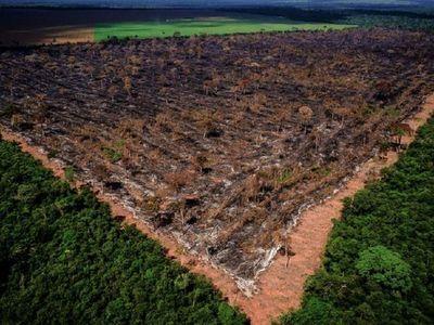 Sin renovación de ley, bosques corren peligro
