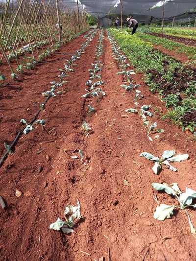 El campo altoparanaense sufre por la falta de lluvias