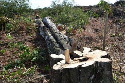 """Diputados plantearán que se amplíe por 3 años el plazo de la """"Ley de Deforestación Cero"""""""