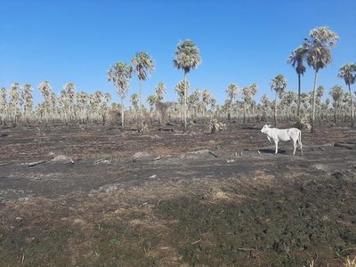 Asisten a productores afectados por incendios y sequía en el Chaco