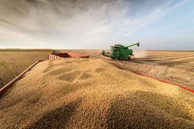 Sequía reducirá cosecha sojera en al menos 2 millones de toneladas