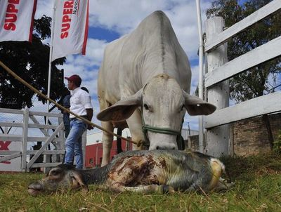 Fuerte impacto económico  de la brucelosis en ganadería