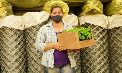 Unas 200 familias paranaenses reciben insumos para tener su propia huerta y producir alimentos – Diario TNPRESS