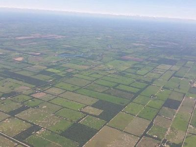 Senado aprueba extender por 10 años Ley de Deforestación Cero