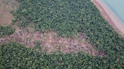 HOY / Senadores extienden ley de deforestación cero por 10 años