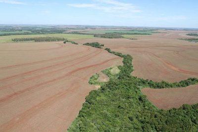 Senadores aprueban extender ley de deforestación cero por 10 años