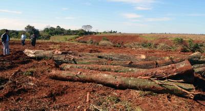 Extienden por 10 años más ley de deforestación cero
