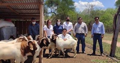La Nación / Apuntan a mejorar producción caprina en calidad y cantidad en el Chaco