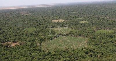 La Nación / Deforestación Cero: ONGs claman a Diputados ratificar versión que amplía por 10 años más la vigencia de la ley
