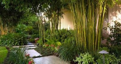 La Nación / Bambú: una especie en auge y los cuidados que necesita
