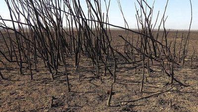 Argentina declara emergencia ambiental en la zona del Delta del Río Paraná
