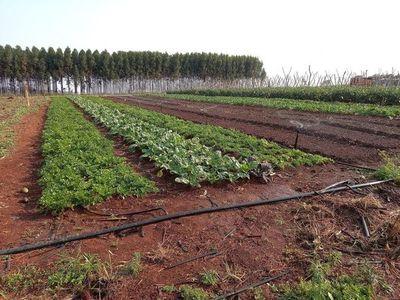 Lluvias traen bonanza a cultivos en el Este
